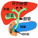 胆管がんの治療法は?早期発見が難しいがんだった