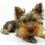 ペット保険を選ぶコツ。タイプ別 安くて人気のあるペット保険