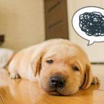 ペットのニオイに効果がある消臭アイテム